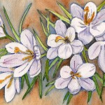 basciano_Crocus_watercolour 6x9 390