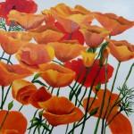 2Huibers_poppies_acrylic 24x24 500 copy