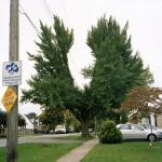 Tecumseh St. (2010)