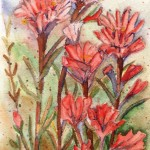 3basciano_Indian Paintbrush_watercolour 9x6