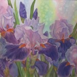 10sneath_purple iris_watercolour_16x20 600